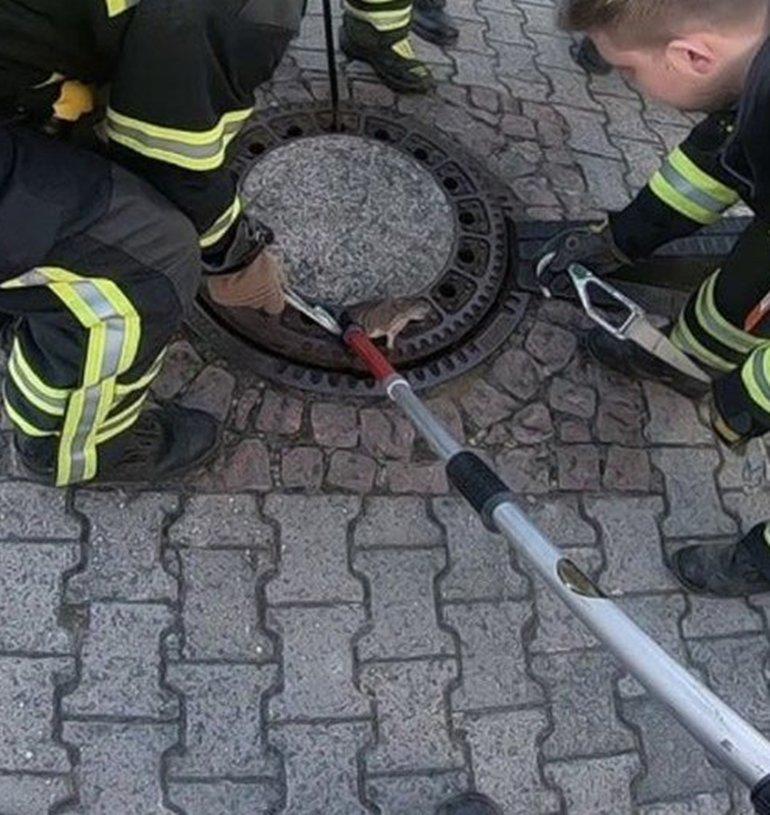 rata atrapada bomberos