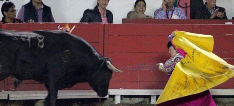 Resultado de imagen para TORO EMBESTIDA MEXICANA
