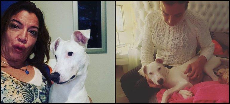 El domingo a puro relax de Lizy Tagliani junto a sus seis perros