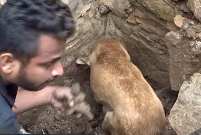 Perra cava entre escombros para salvar a sus cachorros