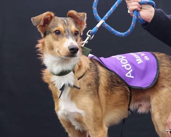 Otro perro da positivo por coronavirus; es el segundo en el mundo