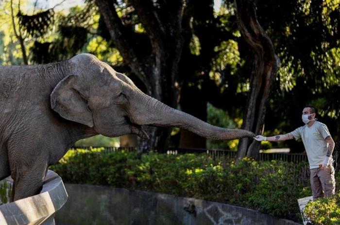 La elefanta Mara del ecoparque será trasladada a un santuario en Brasil